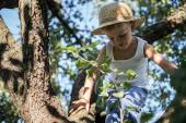 Little boy with straw hat climbing a tree — Stock fotografie