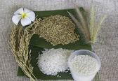 Thailand rice — Stock Photo