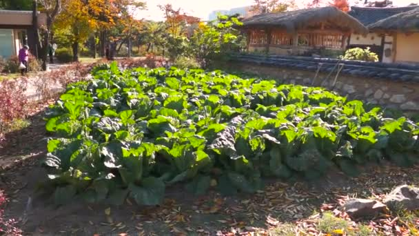 Granja orgánica vegetal photosynthesising con luz de sol de la mañana — Vídeo de stock