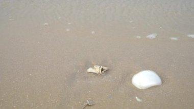 Deniz kabukları dalgalar ile kumlu bir plaj üzerinde onları geçmek — Stok video