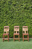 Decorate three wooden chairs against the green small tree wall. — 图库照片