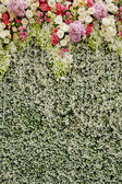 Colorful flowers with green wall for wedding backdrop — Stock Photo