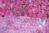 Plenty pink natural flowers seamless background — Stock Photo