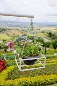 Beautiful flower hanging basket — Стоковое фото