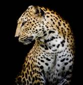 Side of Leopard — Stock Photo