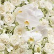 Spring blossom background - abstract floral border of white flow — Stock Photo #64884995
