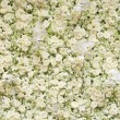 Spring blossom background - abstract floral border of white flow — Stock Photo #64885127