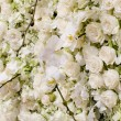 Spring blossom background - abstract floral border of white flow — Stock Photo #64885393