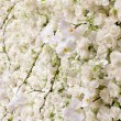 Spring blossom background - abstract floral border of white flow — Stock Photo #64885429