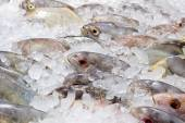 Fresh fishes on ice at the fish market — Stock Photo