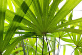 Green leave, leaft background texture — Stock Photo