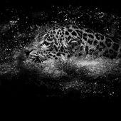 Jaguar  swim — Stockfoto