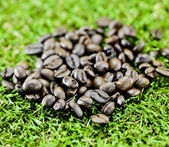 Coffee beans on grass — Stock Photo
