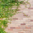 Fresh spring green leaves plant over brick wall background — Stock Photo #65334913