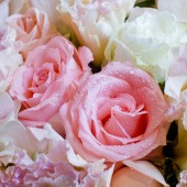 Close up on rose — Stock Photo