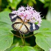 Zářivě žlutý motýl — Stock fotografie