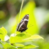 Black and White Butterfly — Stock Photo