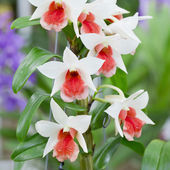 Collection set of White orchid — Stock Photo