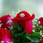 Set of wedding rings in red rose taken closeup. — Stock Photo #70071249