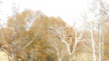 Ducks are landing — Stock Video