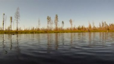 American Alligator on River — Stock Video