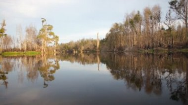 Cypress swamp in United States — Stock Video