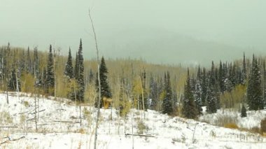 Snowstorm in area of northern Colorado — Wideo stockowe