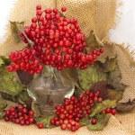 Viburnum berries — Stock Photo #54268303