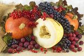 Herfst oogst — Stockfoto