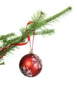 Red Christmas bauble on conifer branch — Stock Photo