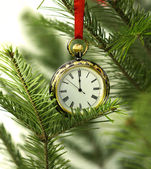 Old pocket watch and natural conifer branches — Stock Photo
