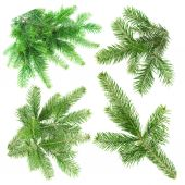 Green fir branches for decoration — Stock Photo