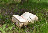 Open book  on grass — Stock Photo