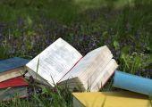 Open  book on  field of flowers. — Photo