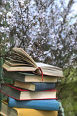 Pile of books and cherry tree — Stock Photo