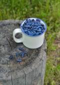 Still life with honeyberries in  cup — Zdjęcie stockowe