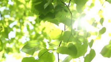 Sun beaming down between leaves — Stock Video