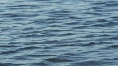 Rippling surface of water — Stock Video