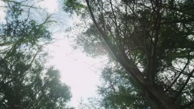 Slider shot of the trees in the forest — Stok video