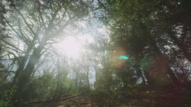 Slider shot of the trees in the forest — Vidéo