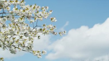 Blossoming tree in spring — Stockvideo