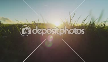 Grass swaying in the breeze at sunset — Stock Video