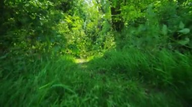 Camera moves along the ground of a lush forest — Stock Video
