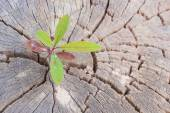 Green sapling growing from old tree stump — Stock Photo