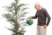 Senior man watering a coniferous tree — Stock Photo