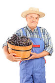 Mature farmer holding a bucket full of grapes — Stock Photo