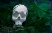Skull with leaves and rainy weather. — Stock Photo