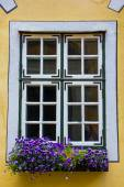 Beautiful window with flower box and shutters — Zdjęcie stockowe