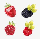 Set of fresh berries Vector illustration — Vettoriale Stock