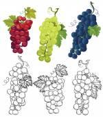 Grapes design vector elements — Stock Vector